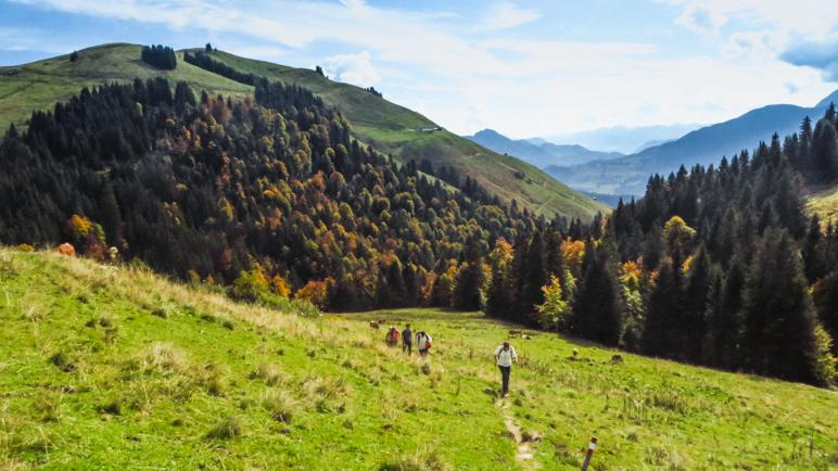 Die letzten Meter hinauf zur Burgeralm führen über Almwiesen