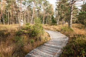 Holzbohlenweg durch das Moorgebiet