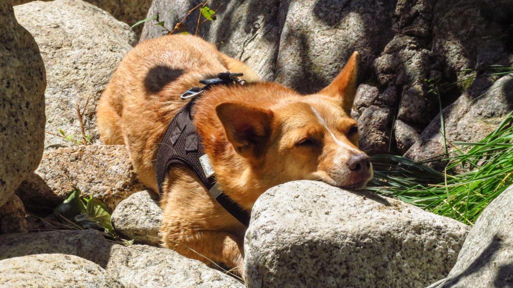 Auch ein Stein kann ein Kissen sein. Ausruhen nach der Wanderung