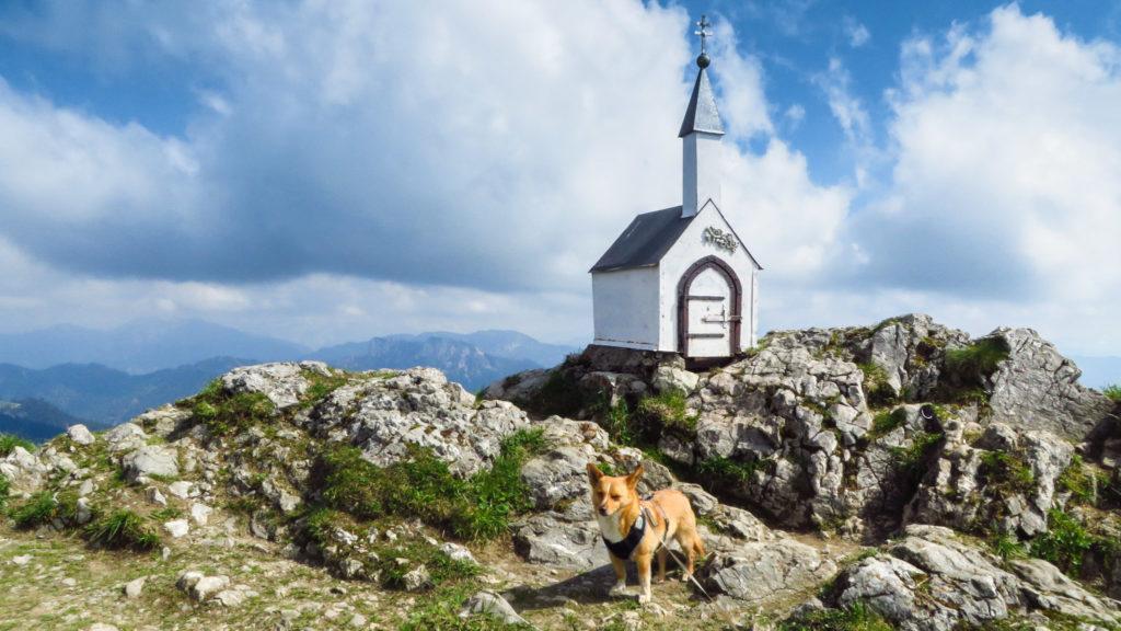 Mikki auf dem Hochgern. Sogar eine Gipfelkapelle in der Größe einer Hundehütte gibt es hier