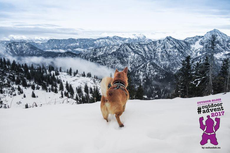 Bergrausch am Rauschberg. Ganz klar, Mikki ist ein echter Berghund