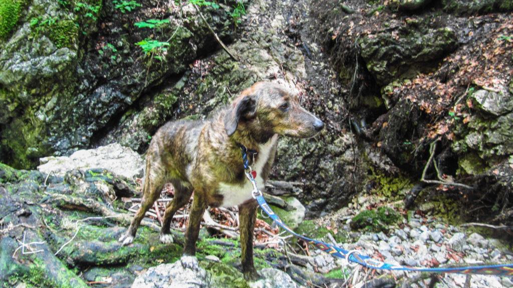 Rufus, gut getarnt im Wald bei den Josefsthaler Wasserfällen