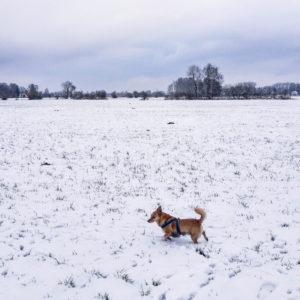 Mikki im Schnee