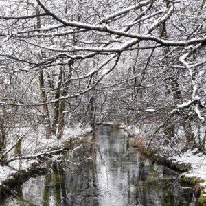 Die winterliche Sempt