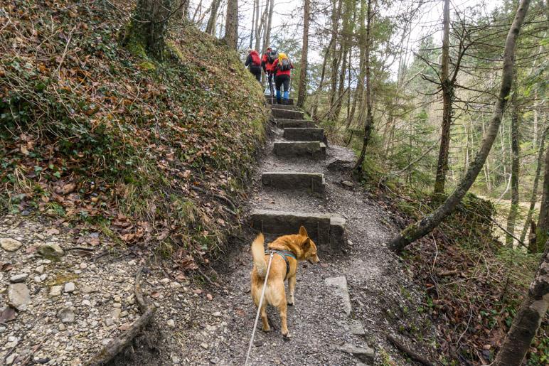 Ein steiler erster Aufstieg: Über Betonstufen in den Wald