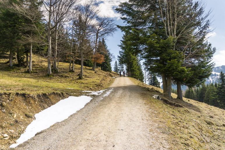 Am Beginn des Almgebietes wechseln sich Wiesen und Baumgruppen ab