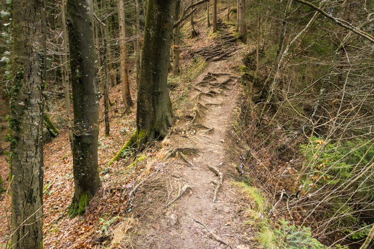 Schmaler, wurzeliger Weg im Wald.
