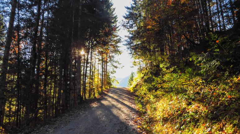 Aufstieg durch den Herbstwald