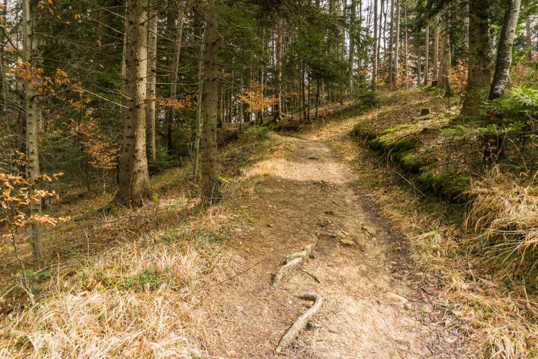 Die meisten Wege durch den Wald sind breit und gut zu gehen