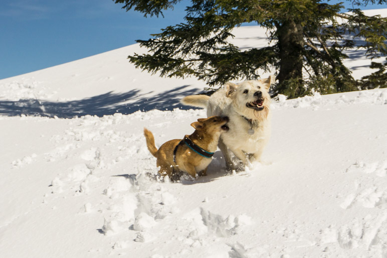 Hundespass im Schnee
