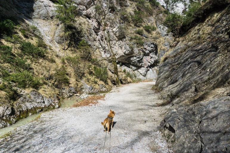 Kleiner Hund und große Felswände