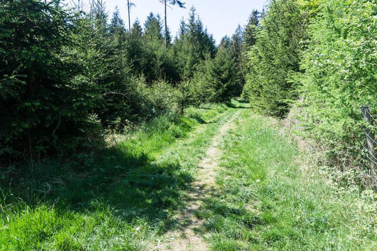 Ein kurzes Stück führt der Weg über Wiesen und etwas wurzeligeres Gelände