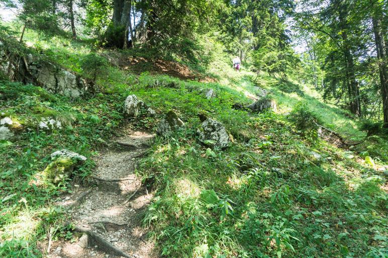 Durch den Wald zum Gipfel des Friedenrath
