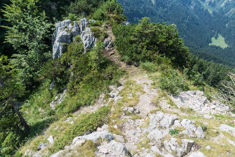 Vom Gipfel geht es auf dem Hinweg wieder zurück zur Wiese