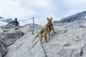 Mikkis erster Klettersteig, der Gamssteig. Ein echter Klettersteig ist es natürlich nicht, seine Sicherung wäre auch etwas ungewöhnlich