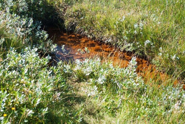 In der Moorlandschaft: Ein kleiner Tümpel mit klarem, aber rostrotem Wasser