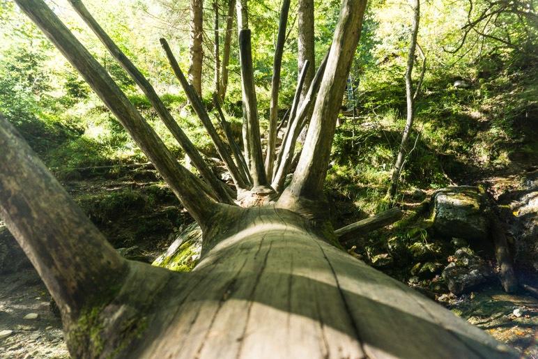 Wer traut sich, über den Baumstamm zu balancieren?