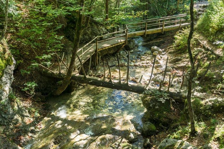 Der Rundweg über die grüne Gumpe mit der Baumstammbrücke