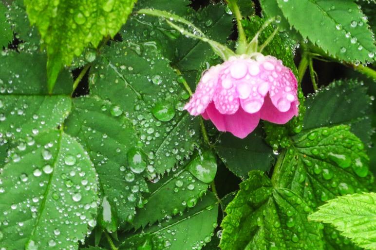 Eine kleine Blüte voller Regentropfen