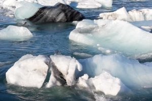 Auch auf dem Jökulsárlón sehen wir wieder von Vulkanasche schwarz gefärbtes Eis