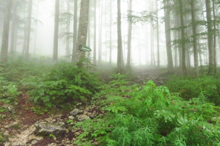 Ein letzes Stück geht es durch den Nebelwald, bevor wir die Raineralm erreichen