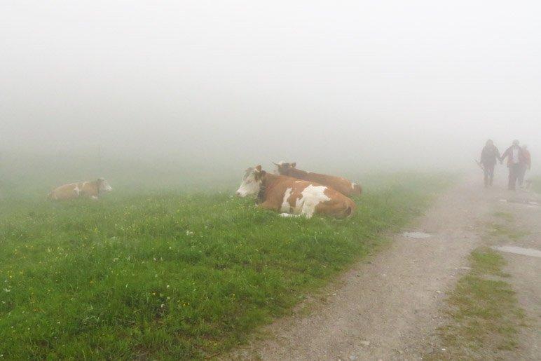Heute bleiben sie neben dem Weg auf der Wiese: Die Kühe der Raineralm