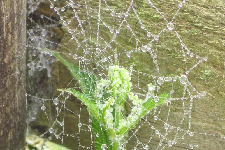 Regentropfen im Spinnennetz gefangen