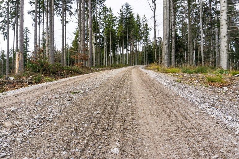 Auf der Forstautobahn