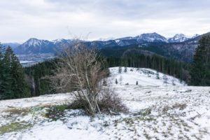 Hollerbusch und Alpenblick