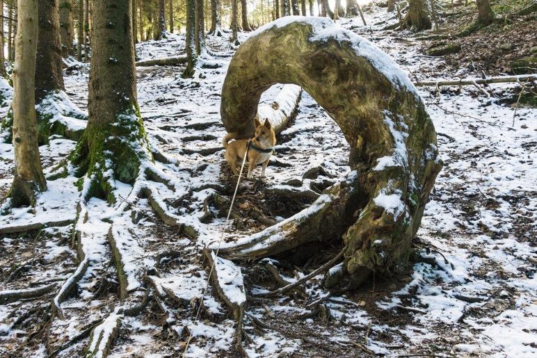 Ein schön rund gebogener Baumstamm liegt im Wlad