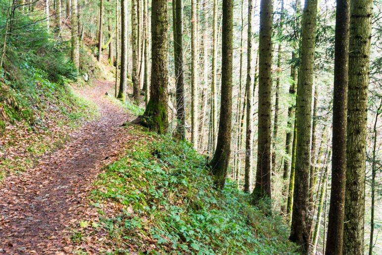 Leichter Aufstieg durch den Wald