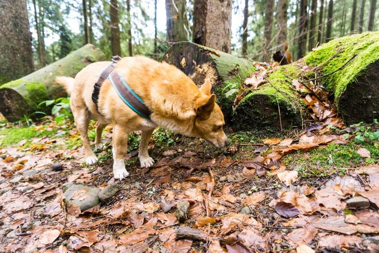 Im Wald riecht es überall interessant