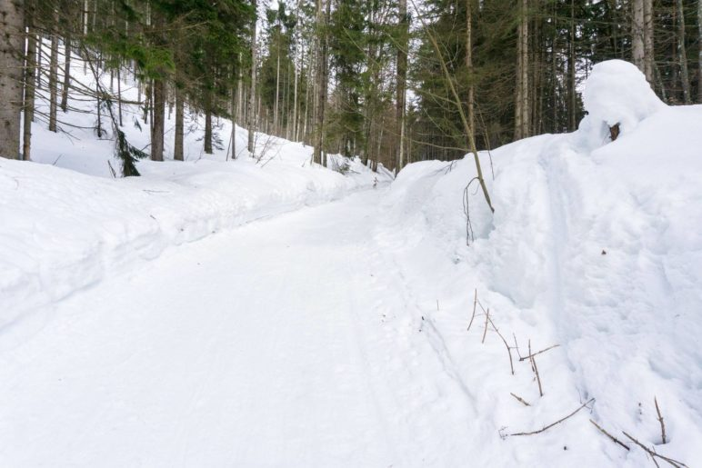 Aufstieg durch den Wald auf der Rodelbahn