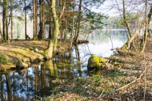 Ufer am Abfluß des Tüttensees