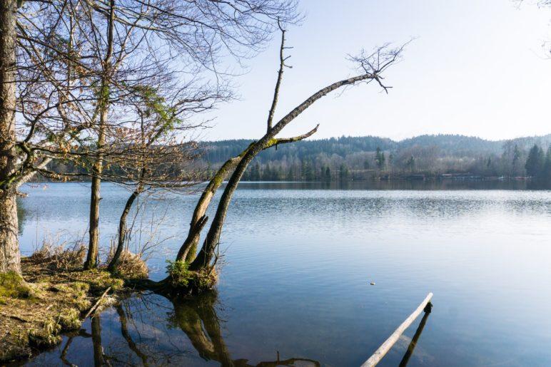 Der kleine Tüttensee im Cheimgau ist ganz von Wald umgeben