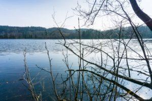 Ein Blick durch die noch kahlen Äste auf den See