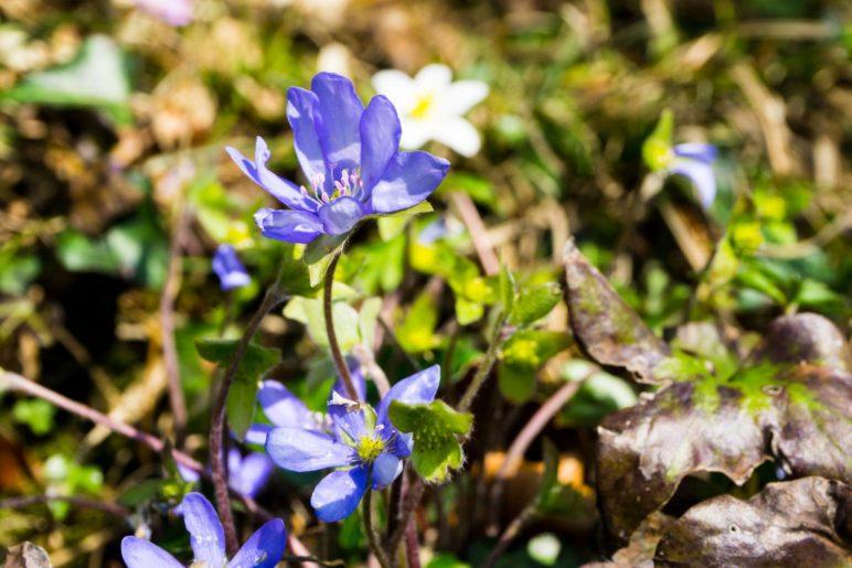 Es ist Frühling geworden im Voralpenland