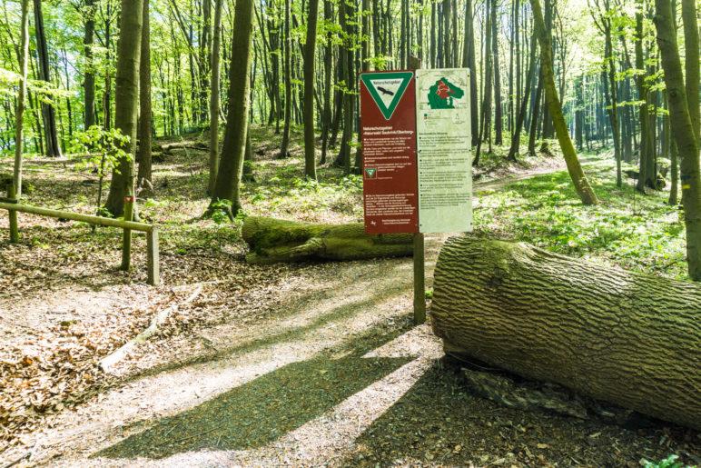 Der Beginn des Naturschutzgebiets Naturwald Saubrink/Oberberg