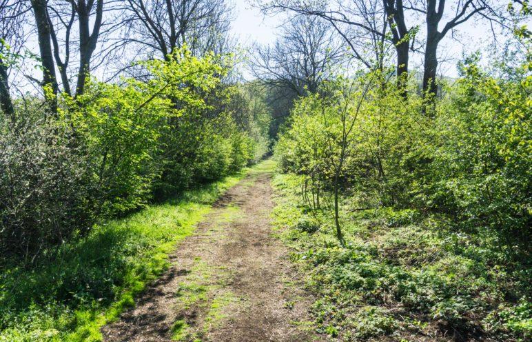 Der Weg in den Wald und auf den Ith