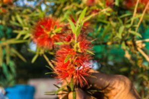 Welche exotische Pflanze ist das denn? Rajaseat Park, Coorg / Madikeri