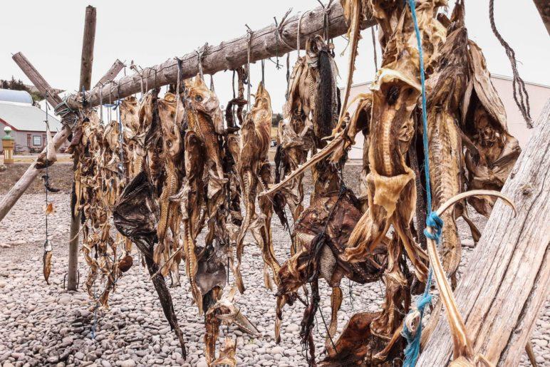 Fischtrocknung im Hafen von Hvammstangi
