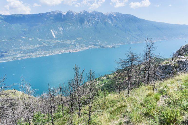 Am Hang stehen die abgestorbenen Bäume, darunter wächst neues Grün