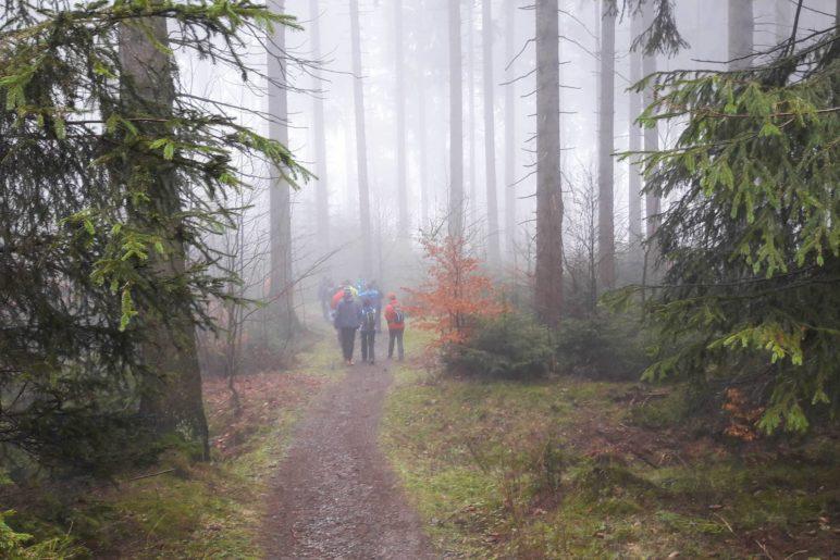 Wanderung durch den Nebelwald zur Graf-Stolberg-Hütte