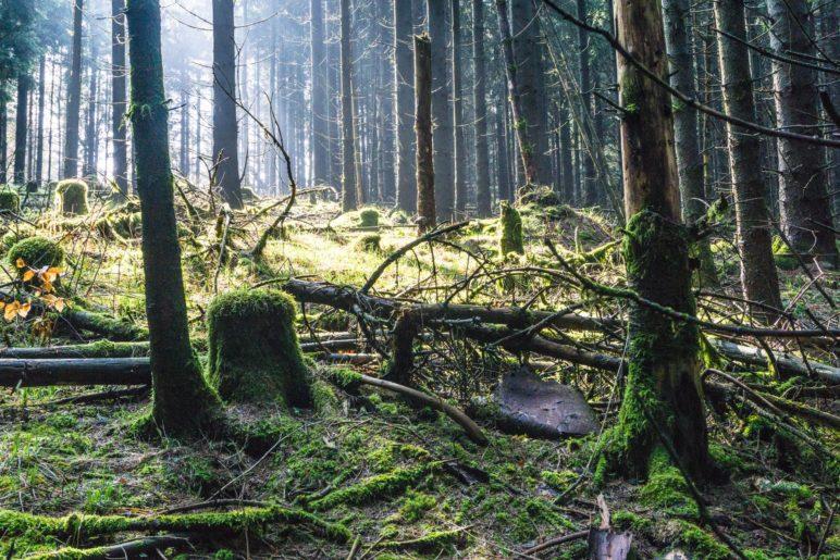 Im wilden sauerländer Wald