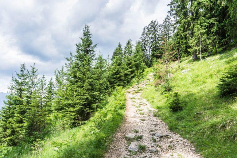 EIn schöner Bergsteig ist der Wanderweg 13 hoch zur Dalfazalm
