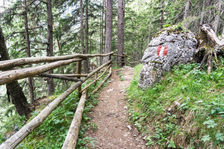 Im Wald zwischen Durraalm und Durrawand