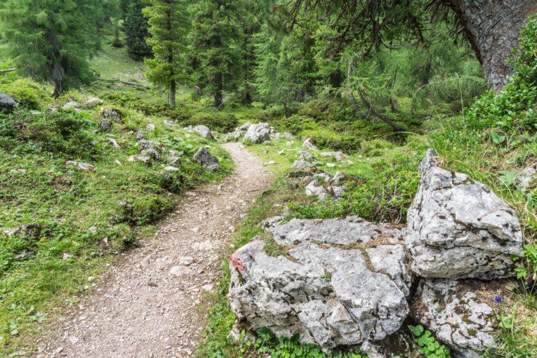 Im Wald, kurz vor der Erfurter Hütte
