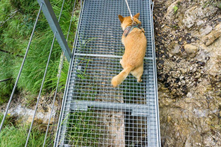 Nicht jederhunds Sache: Die Gitterbrücken. Mikki geht vorsichti mit gespreizten Pfoten darüber