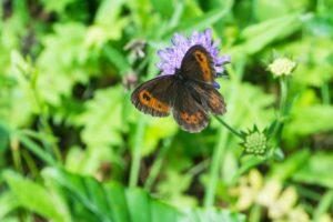 Ein Schmetterling am Wegrand