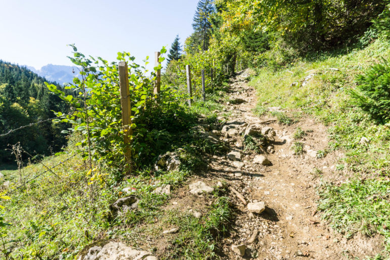 Hinter der Frankenalm wird der Weg zum Steig